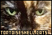 Cats: Tortoiseshell